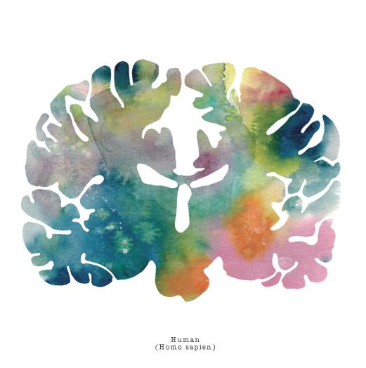Homo sapien brain art