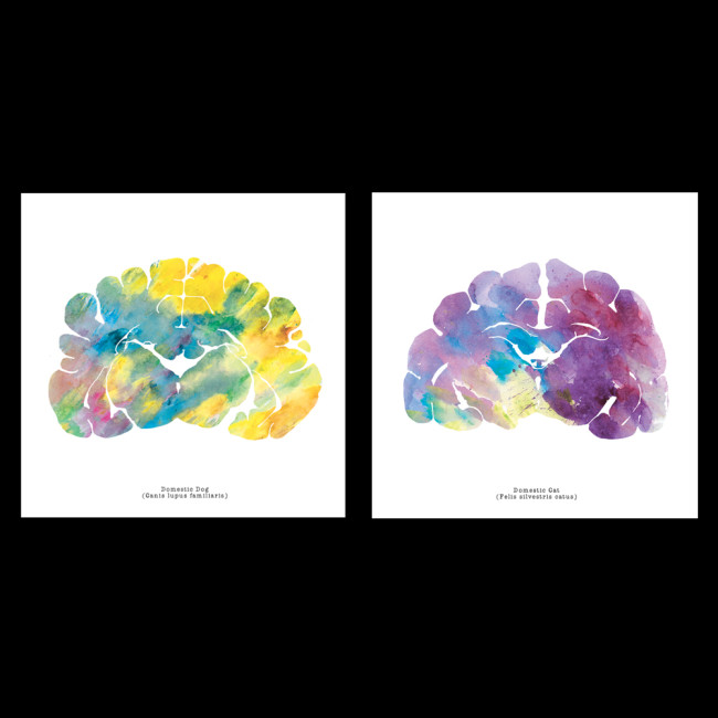 Neuroscience_Art_Brain_Cat_Dog_Watercolor_Print_1