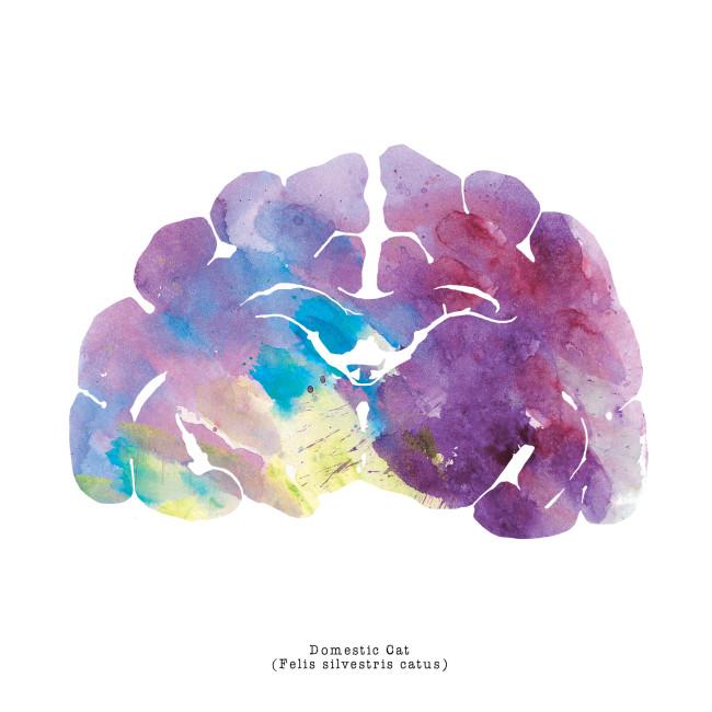 Neuroscience_Art_Brain_Cat_Watercolor_Print_3