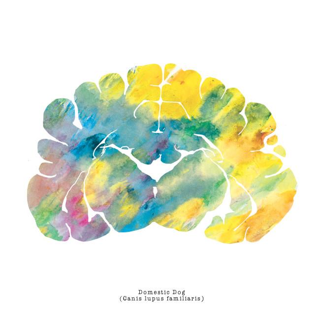 Neuroscience_Art_Brain_Dog_Watercolor_Print_2