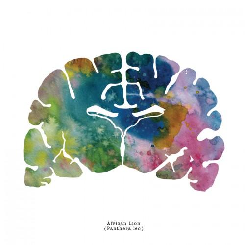 African Lion Brain