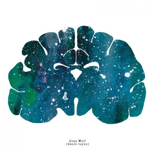 Gray Wolf Brain