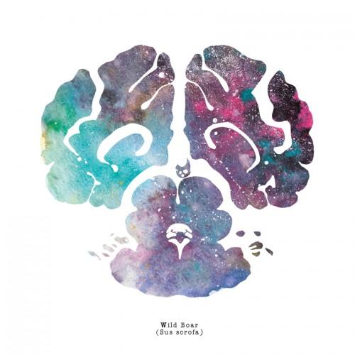 Wild Boar Brain